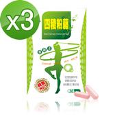【Realwoman】新一代四稜粉藤動纖素(30粒/盒x3盒)