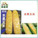 【綠藝家】G08.水果玉米 (黃白穗雙色...