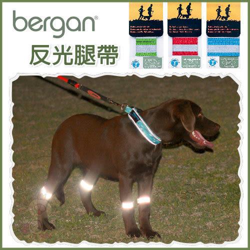 *WANG*美國bergan《反光腿帶》夜間增強遛狗時,安全性及能見度唷,三種尺寸
