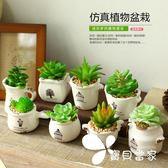 多肉小盆栽-裝飾植物擺件