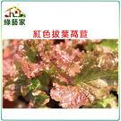【綠藝家】A31.紅葉拔葉甜萵苣種子80...