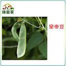 【綠藝家】大包裝E13.皇帝豆(萊豆)種...