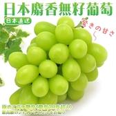【果之蔬-全省免運】日本長野縣溫室麝香葡萄 每串約350-400公克【1串】