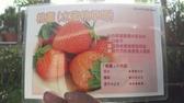 花花世界_水果果苗--(桃薰)水蜜桃風味草莓苗--桃子般香甜味/3吋盆/Ts