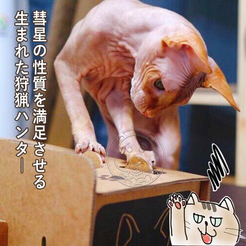 【培菓平價寵物網】DYY》打地鼠瓦楞紙逗貓玩具13.5*30*15.5cm