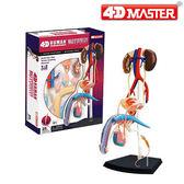 【4D 立體拼組模形】人體解剖教學模型系列 - 男性生殖系統