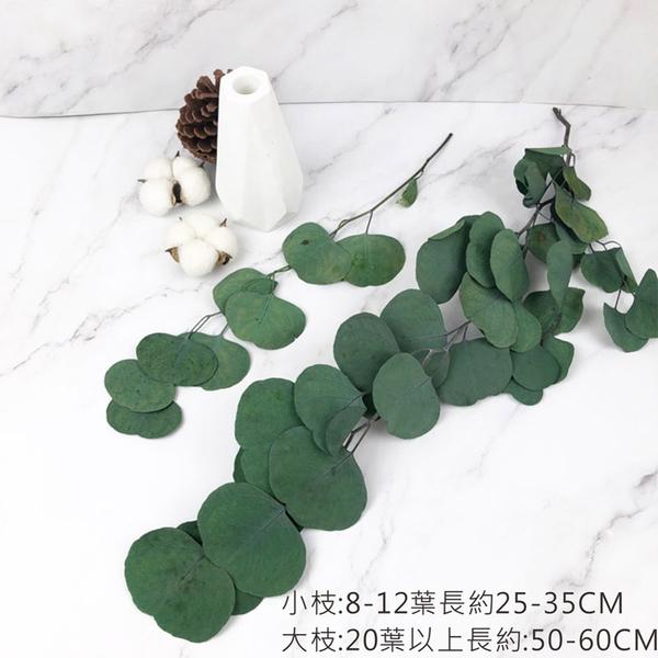 25-35CM進口永生大圓尤加利葉 -不凋乾燥花圈 乾燥花束 不凋花 拍照道具 室內擺飾 乾燥花材 -48元/支