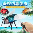 遙控玩具新品遙控七星瓢蟲模型創意電動蜜蜂蒼蠅整人仿真昆蟲抖音整蠱玩具 數碼人生