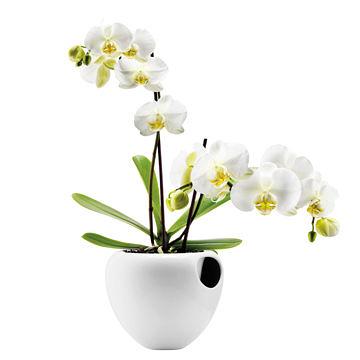 丹麥 Eva Solo Orchid Pot 17cm 圓孔 自給式花盆