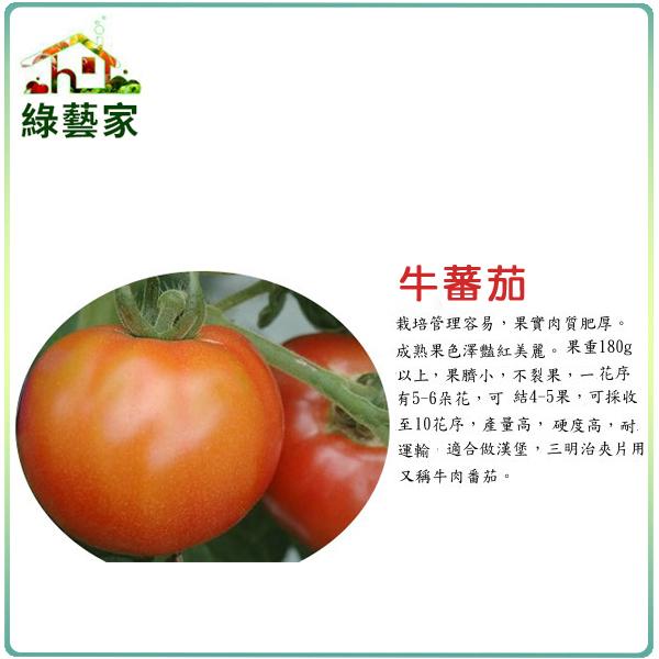 【綠藝家】大包裝G36.牛蕃茄種子80顆