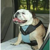 ★美國Bergan【 氣墊胸背帶 XL號】配戴簡易,舒適耐用,經過V9DT寵物安全耐久性試驗合格(88233)