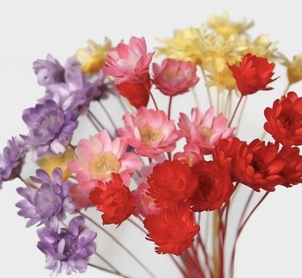 永生花花材,日本大地農園小星花一束10支