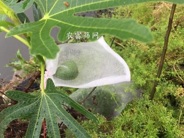 尼龍網袋種子袋