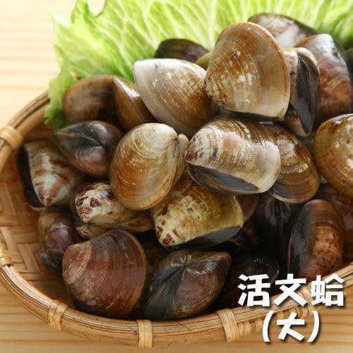 活文蛤(大)400g