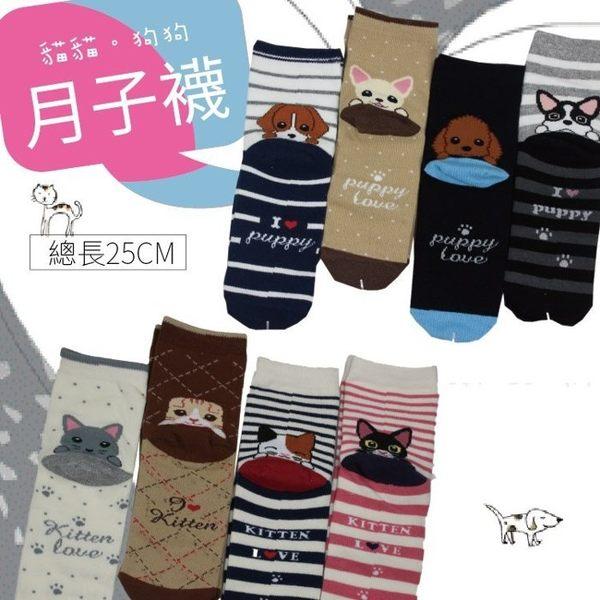 禮盒組【DC0009】日本超卡哇伊動物短棉襪 蕾絲襪 保暖襪 造型襪 搭配雪靴 做月子 月子襪