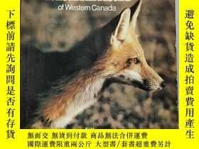二手書博民逛書店wild罕見mammals of western canada-