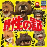 【小福部屋】日本 野性的怒吼 第一彈 獅子.熊.猩猩.狗.河馬.貓 扭蛋 全6種【新品上架】