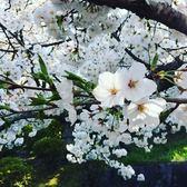 【2張 : 258元】2018 臺中世界花卉博覽會 - (花博原價單張 : 350元)