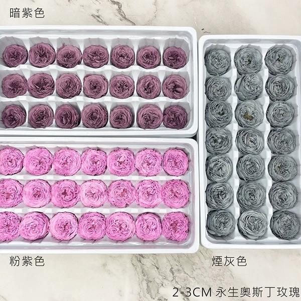 進口永生2-3CM 奧斯丁玫瑰-乾燥花圈 乾燥花束 不凋花 拍照道具 室內擺飾 乾燥花材-52元/朵
