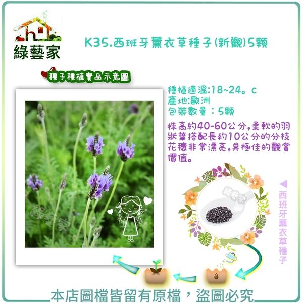 【綠藝家】K35.西班牙薰衣草種子(新觀)5顆