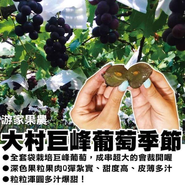 買1送1【產地直配】大村特大顆巨峰葡萄 共2盒【淨重4台斤±10%/盒 約4串】