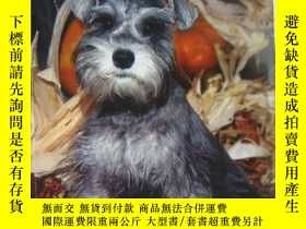 二手書博民逛書店SCHNAUZERS:A罕見complete pet owner