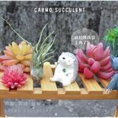CARMO紅犀牛T. pruinosa 空氣鳳梨(單入) 空鳳【KF092】