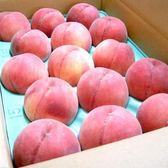 【果之蔬-全省免運】日本長野志賀白鳳桃X1箱(5kg±10%含盒重/盒 13入)