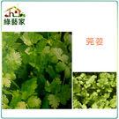 【綠藝家】F04.芫荽(香菜)種子50...