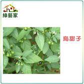 【綠藝家】大包裝A47.烏甜子(龍葵)種子20克