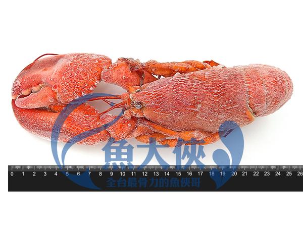 1B7B【魚大俠】SP065熟凍波士頓龍蝦(350~400g/隻)