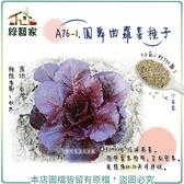 【綠藝家】A76-1.圓舞曲蘿蔓種子0.6克(約550顆)