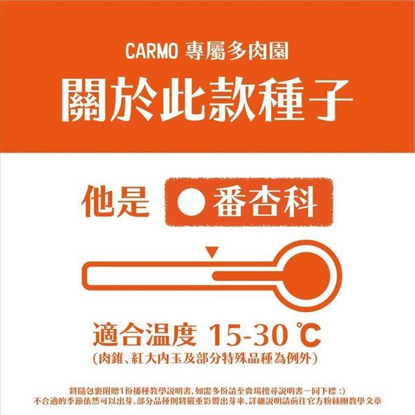 CARMO駝峰花多肉生石花種子(10顆)【G22】