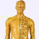 超清晰經絡通人體穴位模型針灸銅人模型經絡...