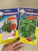 泰國料理 種子DIY   打拋葉 (聖羅勒,荷立羅勒) 泰國朝天椒 0.5g 非分裝