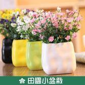 雛菊滿天星絹花假花塑料仿真花客廳隔板裝飾花藝套裝 田園小盆栽 挪威森林