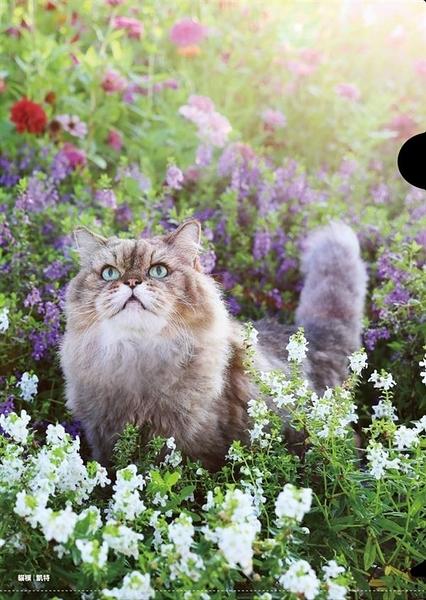 《神貓好事都花生》單層式L夾/紫花X凱特【臺北市流浪貓保護協會】