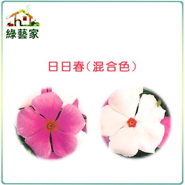 【綠藝家】H39.日日春(混合色,高45~60cm)種子20顆