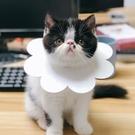 貓咪伊麗莎白太陽花項圈