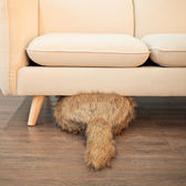 【吸貓神器】仿生無頭貓 抱枕仿生貓咪尾巴抱枕沙發靠墊 貓尾巴抱枕動物哈士奇