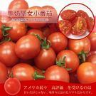 【果之蔬-全省免運】頂級溫室牛奶聖女蕃茄X10盒 【每盒300g】