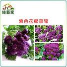 【綠藝家】B23.紫色花椰菜筍種子60顆...