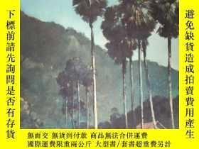二手書博民逛書店NHEK罕見DIM(柬埔寨藝術家 NHEK DIM 畫集)Y23
