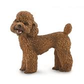 【永曄】collectA 柯雷塔A-英國高擬真動物模型-家庭動物- 貴賓狗