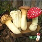 【發現。好貨】發洩減壓蘑菇杏包菇金針菇松...
