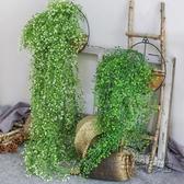 仿真金鐘柳客廳墻面裝飾室內綠植壁掛花假花藤條垂吊植物吊蘭藤蔓HM 衣櫥秘密