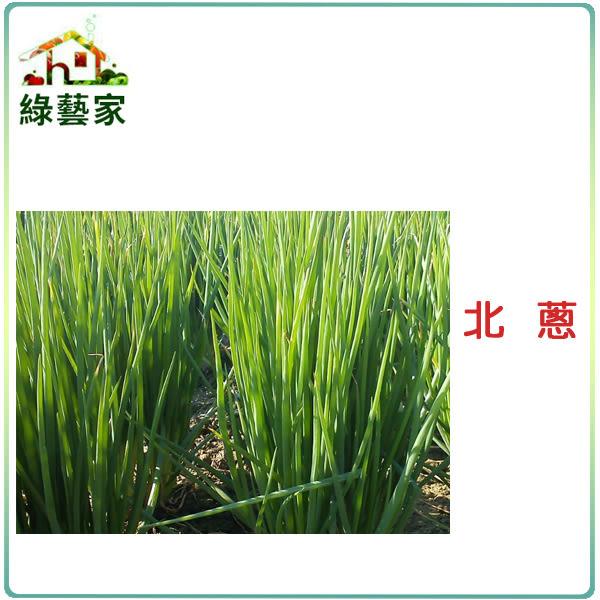 【綠藝家】大包裝D04.北蔥種子65克(約2萬4千顆)