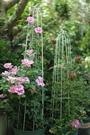 圓形小鳥爬藤架月季鐵線蓮專用架做舊鳥籠花架陽台盆栽植物架花盆 夢幻小鎮