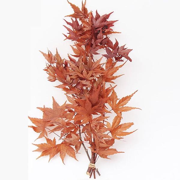 日本進口大地農園紅色楓葉永生花,DIY乾花材料配材裝飾02245,一小份 (如圖二)