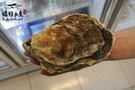 【禧福水產】美國生食級帶殼大生蠔XL◇$特價85元/顆/Jumbo◇最低價SGS檢驗報告齊全餐廳團購批發